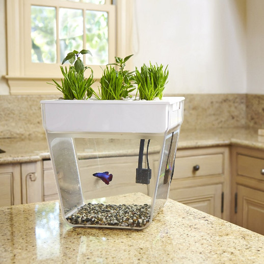 Aqua farm self cleaning fish bowl and herb garden cool for Cleaning fish bowl